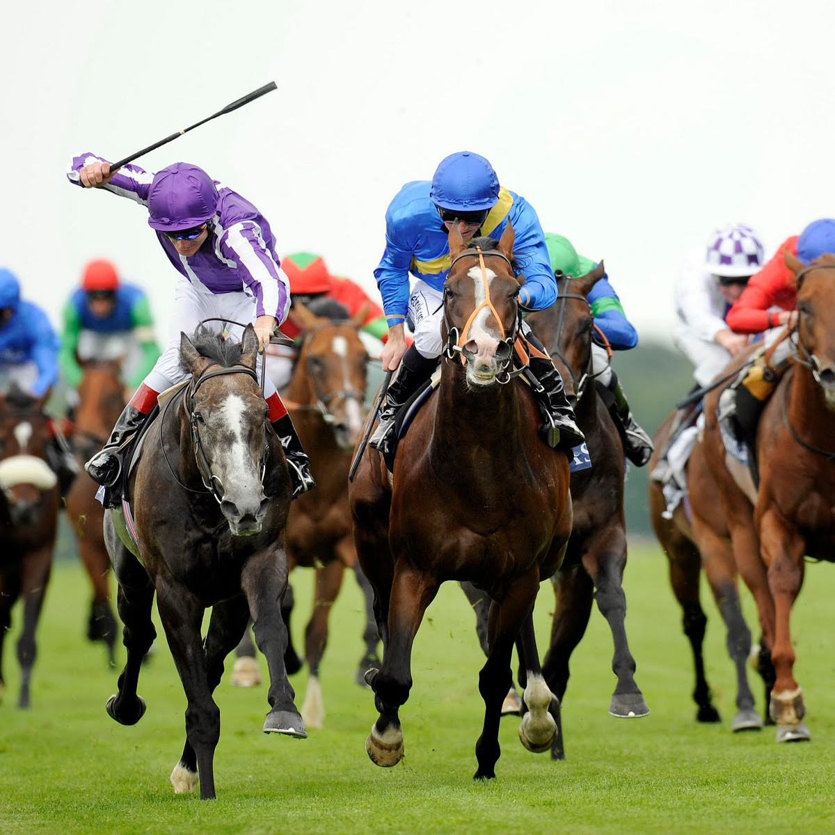 horse-racing-tipster-reviews